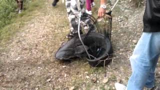 Рыбалка на сома в Италии(Сом обыкновенный — Silurus glanis Linnaeus масса: 32кг длина: 165см наживка: блесна диаметр лески : 0,2., 2013-10-22T05:36:13.000Z)