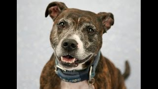 Frank - Available for adoption from the Blue Cross, Lewknor