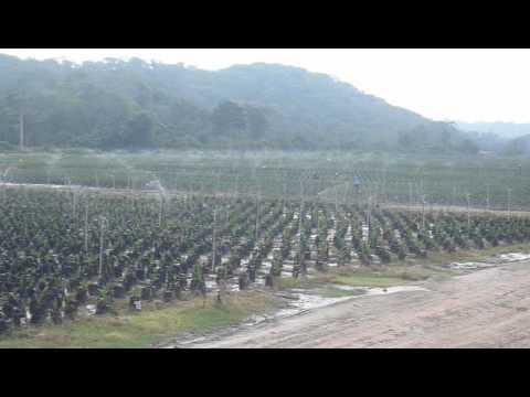 Vivero de palma de aceite en colombia riego por aspersi n for Viveros en colombia