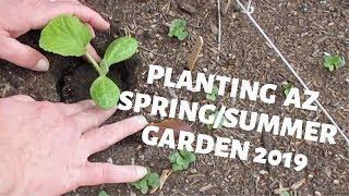 Planting our Spring/Summer Garden in our Zone9b Arizona Backyard Garden wk3