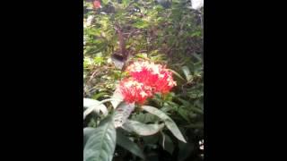 Kupu kupu cantik di balkot bandung