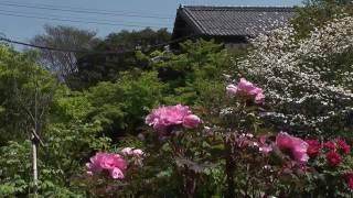 大垣市 「お茶屋屋敷跡 ぼたん園」