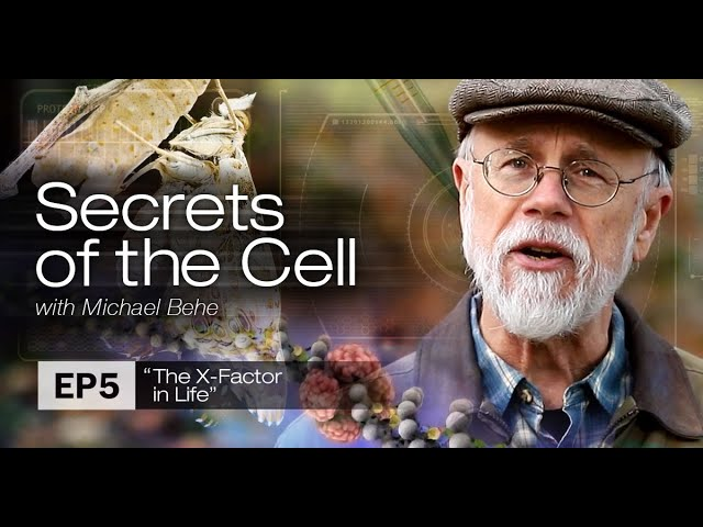 The X Factor in Life (Secrets of the Cell with Michael Behe, Ep  5)