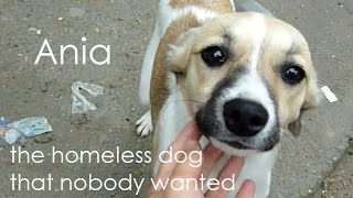 Homeless Dog That Nobody Wanted Gets a Second Chance at Life - Howl Of A Dog