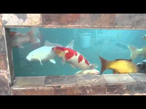 Bassin vitr youtube for Brumisateur bassin exterieur
