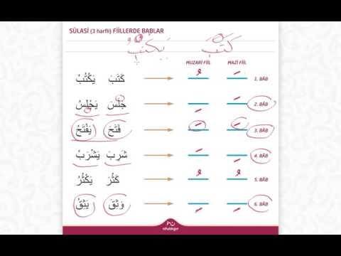 Sülasi (3 Harfli) Fillerde Bâblar Genel Anlatım | Arapçanın Anahtarı #80