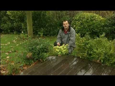 Entrepreneur de jardin youtube for Entrepreneur jardin