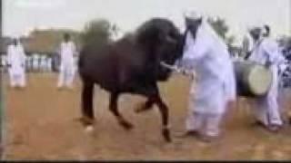 حصان عجيب  Horse Wonderful 马精彩
