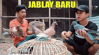Single Terbaru -  Burung Merpati J4bl4y Mas Rizal