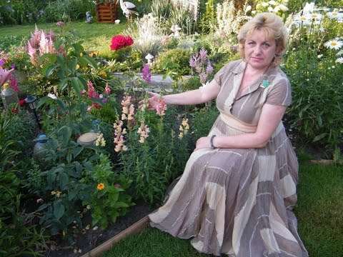 ЛЬВИНЫЙ ЗЕВ . Выращивание и уход . Радуга настроения. Цветы в саду