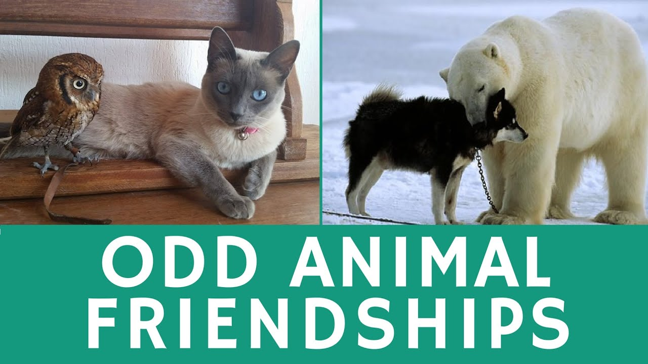 Funny ANIMAL COUPLES Stories About Unusual Friendship Of - 15 unlikely animal friendships will melt heart