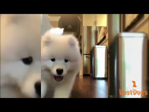 Cute Dog and Funny dogs | cute puppies videos Compilation | Best dogs 2018