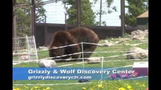 Bear Fence Test