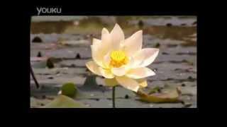 Seven Buddhas' Dispelling Iniquity Mantra - Shui Liu Li 婆娑 (七佛滅罪真言) - 水琉璃 Mp3