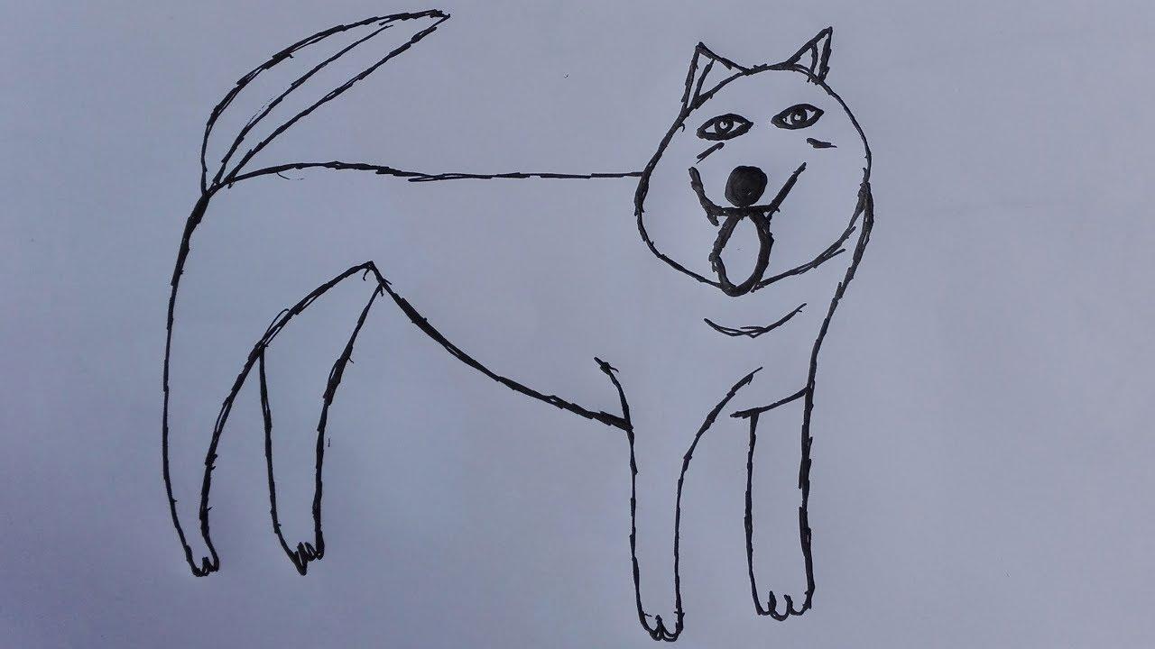 how to draw siberian husky draw a husky face draw a husky puppy step