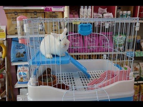 อุปกรณ์การเลี้ยงกระต่าย
