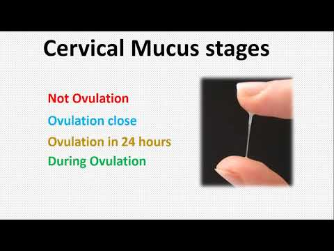 calculate-ovulation-using-cervical-mucus-(white-discharge)-to-get-pregnant---tamil