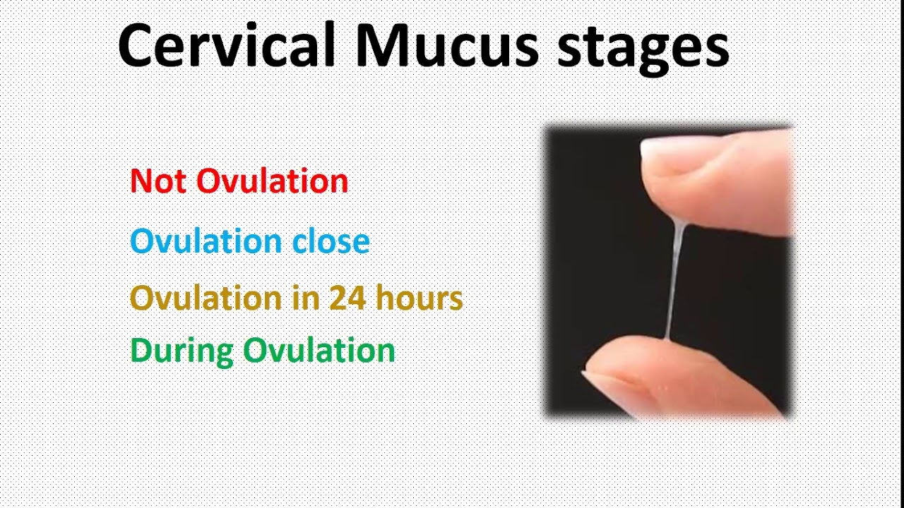 calculate ovulation using Cervical Mucus (White discharge ... Ovulation Discharge