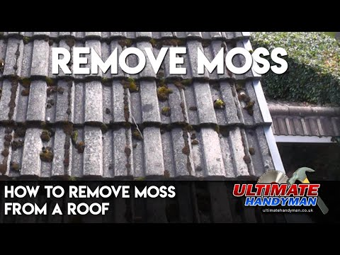 How To Get Rid Of Moss On Walkways Driveways Roofs And