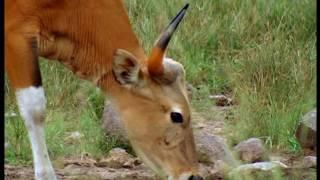 Documentaire Animalier Chroniques de l'Asie Sauvage DVD 2/3