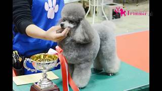 2017年4月2日に東京ビッグサイトで行われた、JKC 第36回トリミング競技...