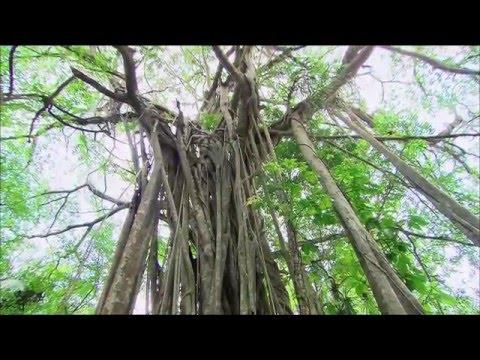 Die neuen Paradiese   Belize   Land zwischen Dschungel und Korallen