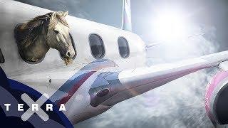 Business Class für Pferde | Luftfracht