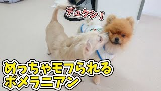 にこちゃん『デュクシ!デュクシ!』 ポンプくん『やめろよ~』 犬のひ...