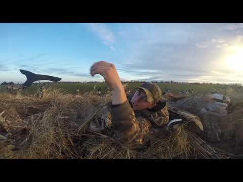 Slaying The Honkers On A Wheat Field| Goose Hunt 2018