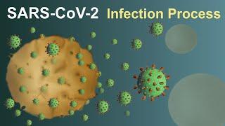 SARS-CoV-2 (Covid-19) Infection Process