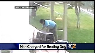 Chino Hills Kids Catch Neighbor Allegedly Beating Dog In Backyard(, 2014-06-13T02:03:49.000Z)
