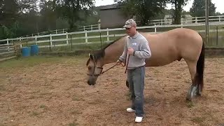 Equine therapy offering support to veterans at New Jersey stable