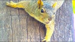 Squirrel Climbing Tree - So Funny Animal