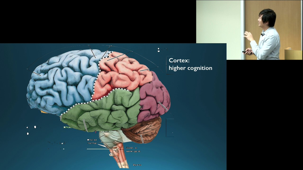 parts of the brain and its functions psychology pdf