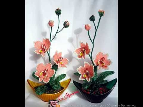 Топ 20. Самые красивые орхидеи. Май 2016