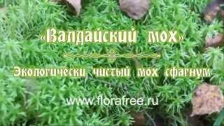 видео Мох сфагнум для комнатных растений: для чего используют