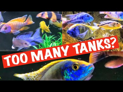How Many Tanks are Too Many? - More IS BETTER!