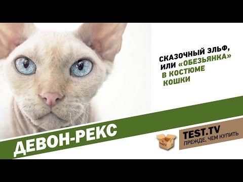 TEST.TV: Девон-рекс кошка похожая на Йоду.