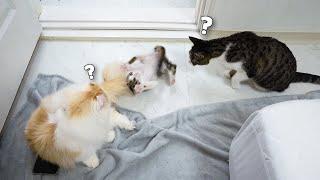 A Little Kitten Acts Weird Bet…