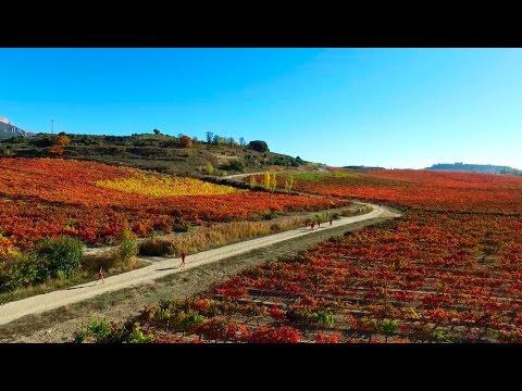 Rioja Alavesa Wine Run 2016