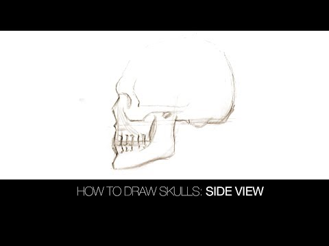 How to Draw Skulls: Side View