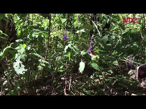 """""""aquí-las-mariposas-vienen-a-descansar"""":-biólogo"""