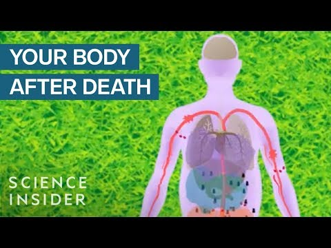 This is What Happens to the Body After Death | Videos