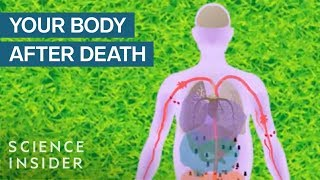 What Happens To Your Body After You Die