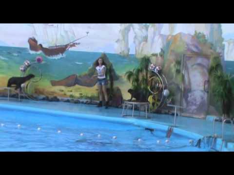 Дельфинарий Немо Ереван 29 09