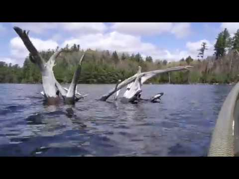 Adirondack Brook Trout; Spring 2019: Really A Splake