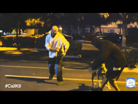 Cali K9® Protection K9 Training - San Jose & San Francisco