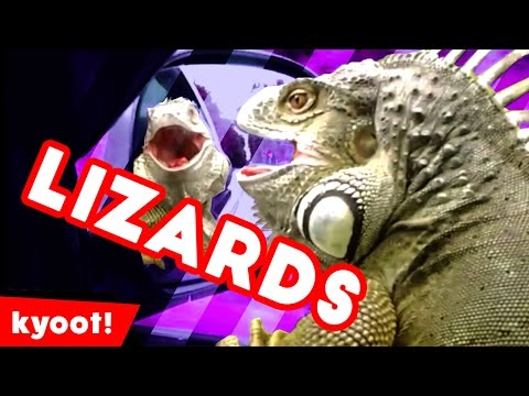 The Funniest Cutest Lizards & Reptiles Bloopers of 2016 Weekly Compilation | Kyoot Animals