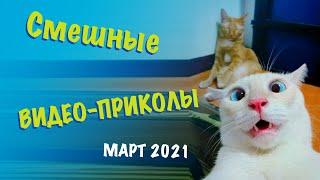 СМЕШНЫЕ видео и ПРИКОЛЫ с животными Колбаса Media март 2021