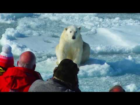 Arctic & Iceland 2018 Expeditions | Lindblad Expeditions-National Geographic